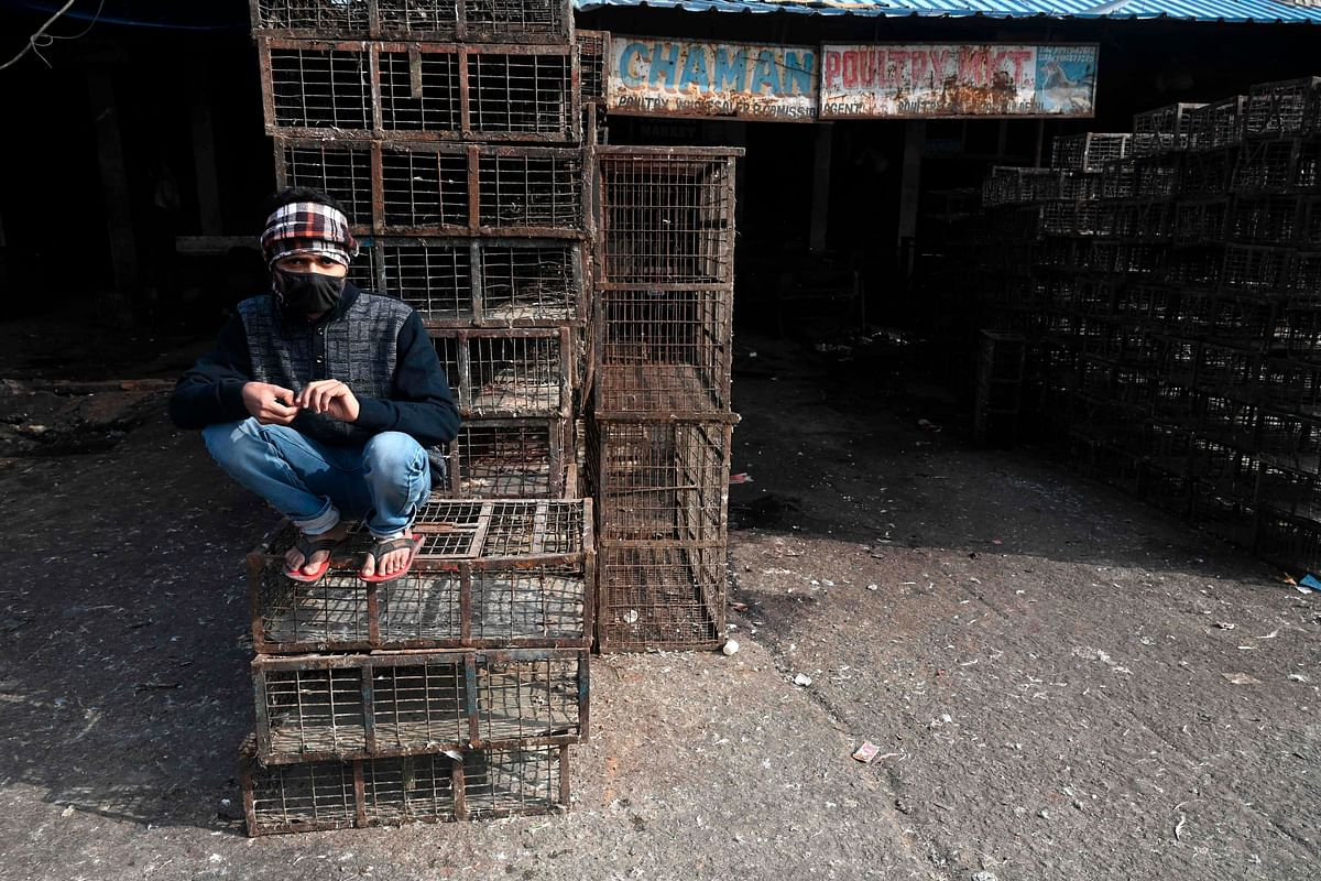 Bird flu: Delhi govt restricts supply of processed chicken from outside, Centre objects to closure of Ghazipur poultry market