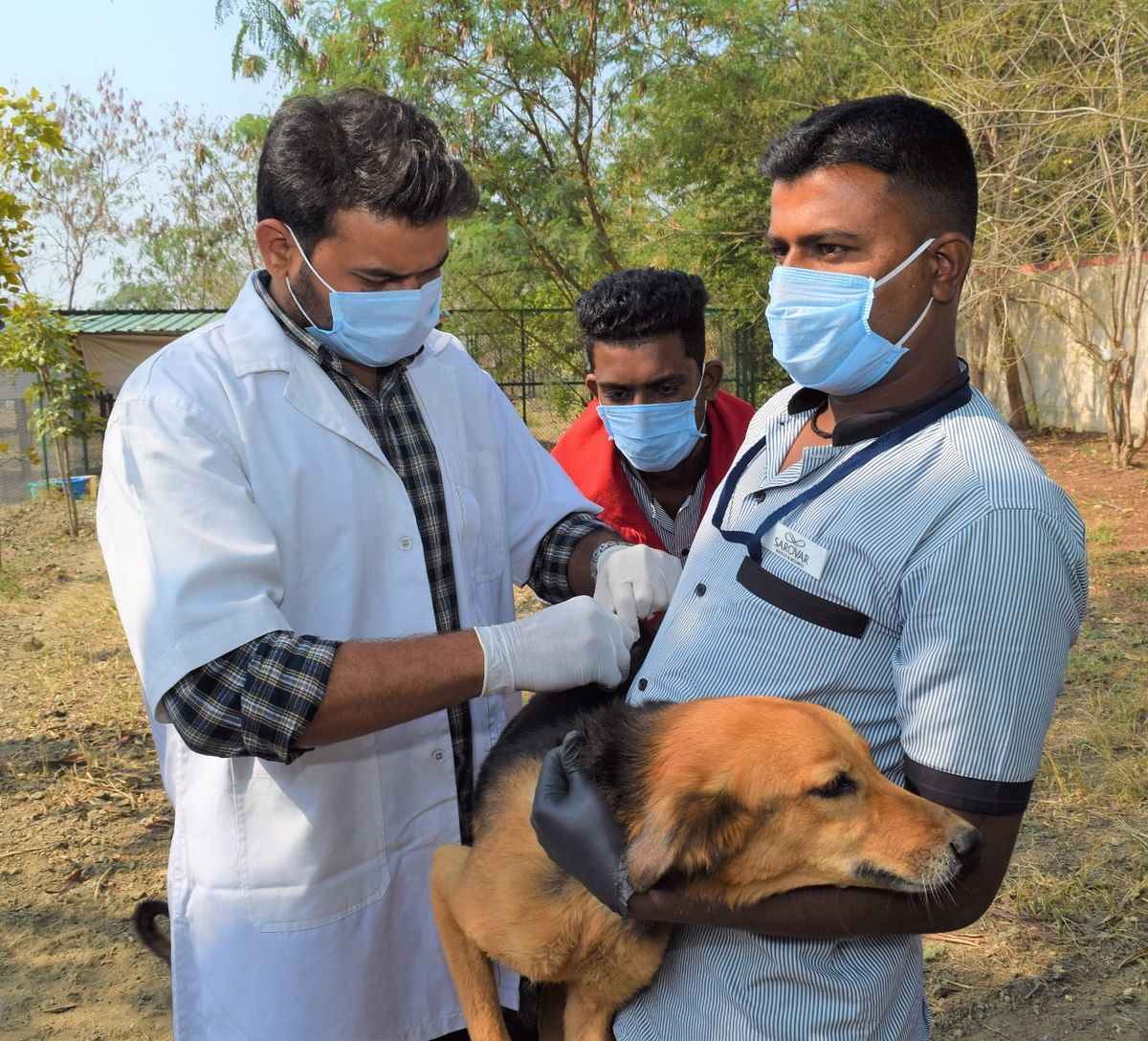 It's paw-sible: Stray dogs guard IIM Indore campus