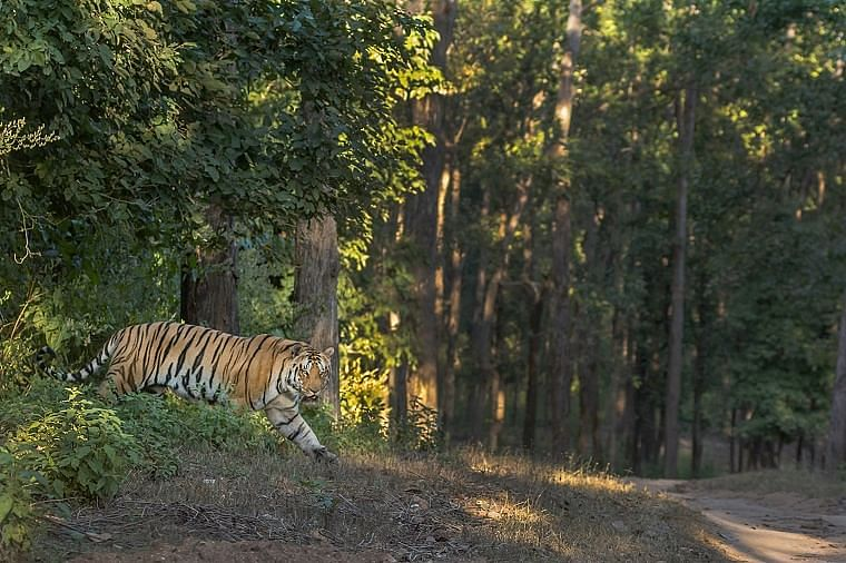 No relief for kingpin of racket that killed, sold tiger skin, nails