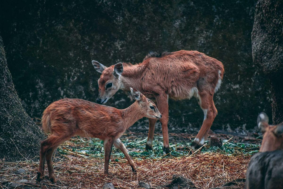 Pic by Nayan Vishwakarma