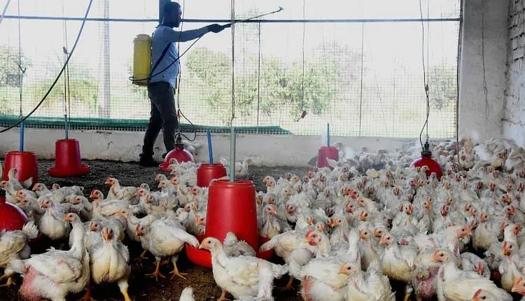 Madhya Pradesh: Bird flu footprints spread to 18 districts;1500 birds fall dead in 41 districts, samples sent for test