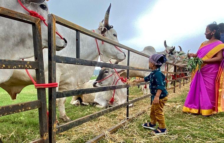 Bring back natural farming, traditional crops: Sadhguru's appeal at Mattu Pongal celebrations
