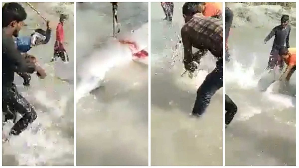 UP: Three arrested for beating dolphin to death in Pratapgarh district