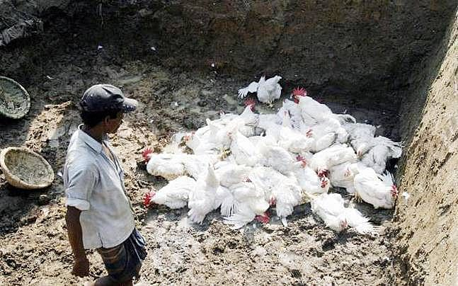 After 400 crows die due to viral infection in 7-8 districts of MP, alert sounded following bird flu outbreak in the state