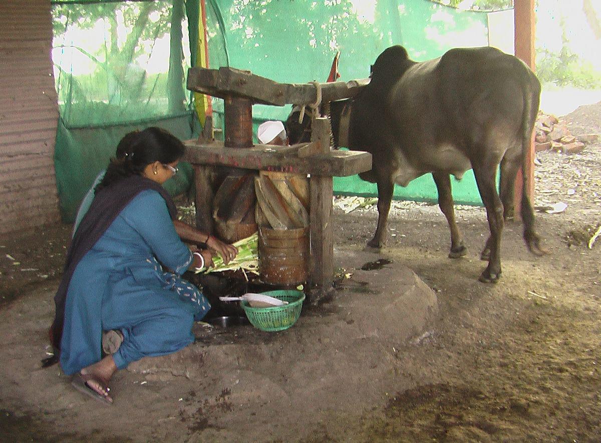 BHOPAL: IGRMS displays Aurangabad's traditional sugar cane crusher 'Ganna Charakh'