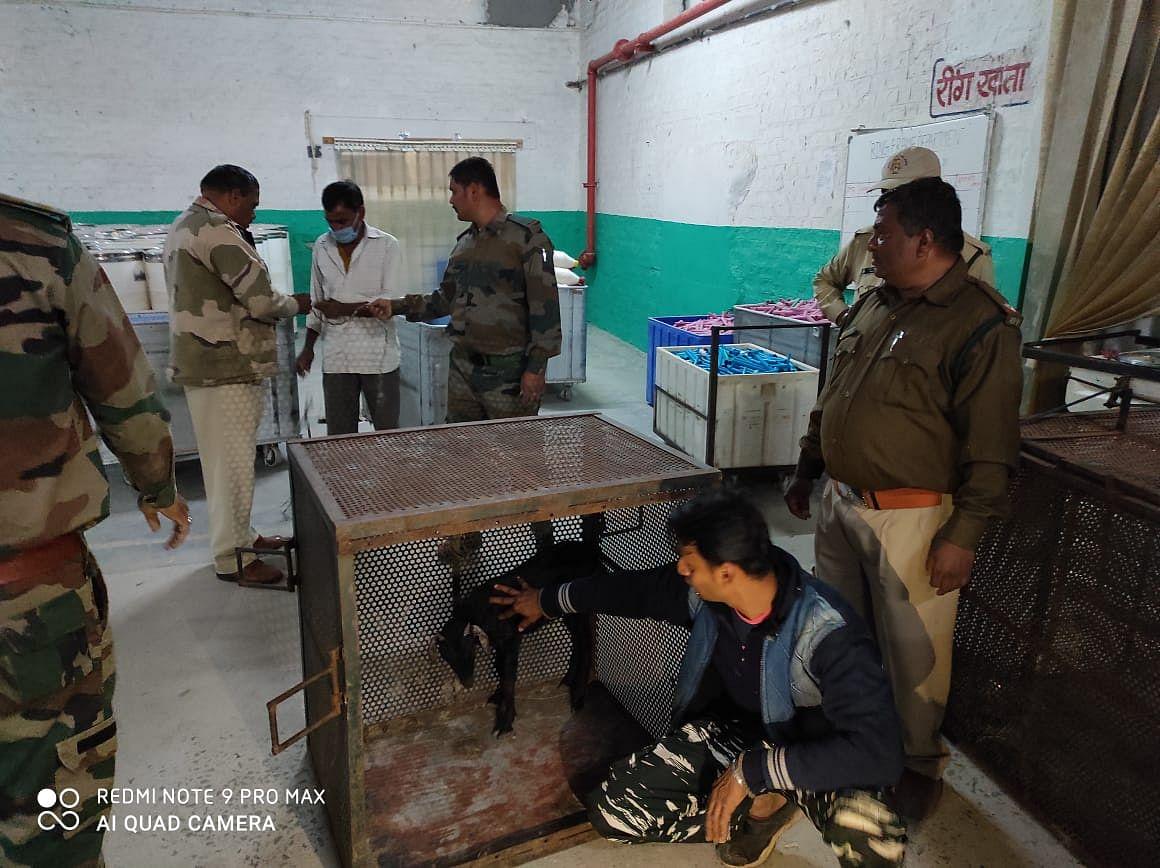 Madhya Pradesh: Leopard breaks into Avanti Yarn Mill in Sanawad, two laborers injured