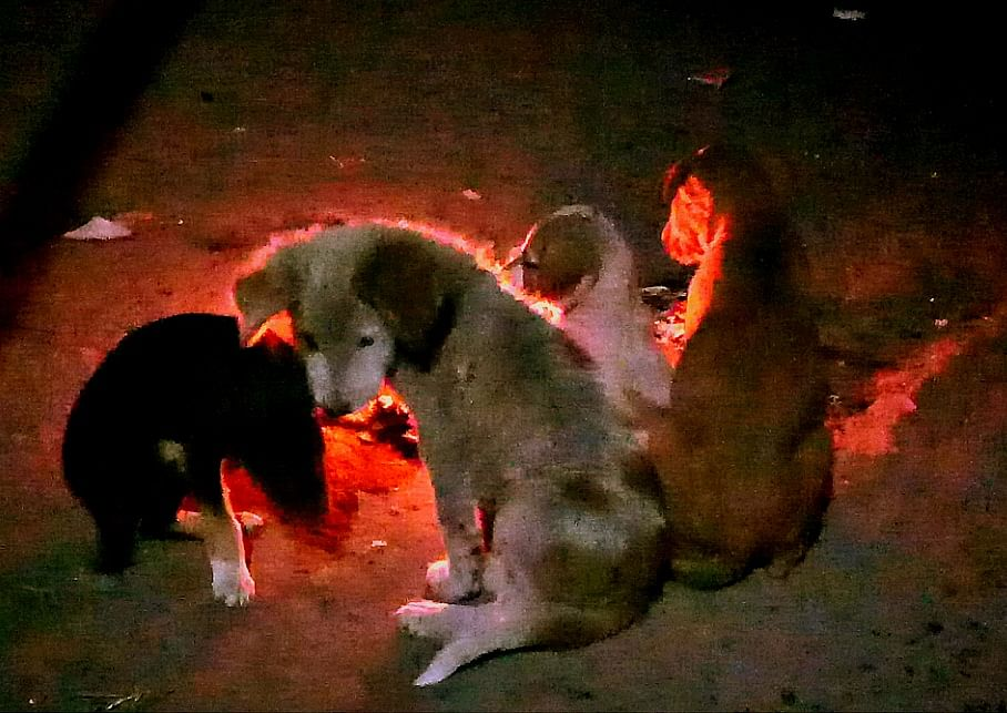 Madhya Pradesh: Covid changes man's relation with best friend in Udaigarh