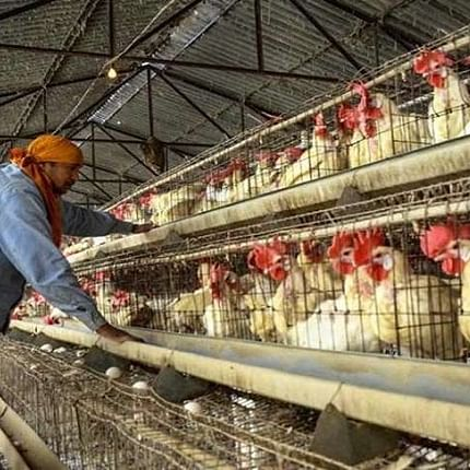 Bird Flu outbreak: Causes, prevention, treatment - here's all you need to know