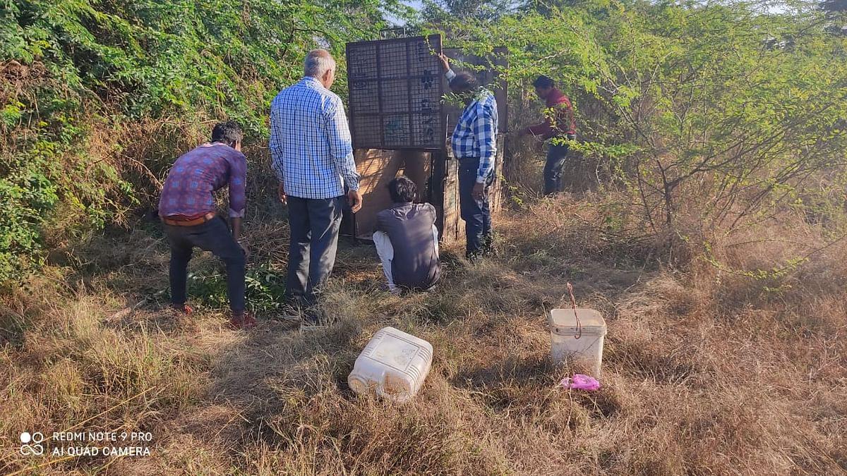 Forest department team looks for pug marks in Dhar district