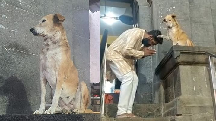 Watch: Video of dog 'blessing' devotees outside Ahmednagar's Siddhivinayak Temple is the cutest thing on the internet today