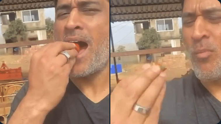 MS Dhoni binges on strawberries from his farm, says 'there won't be any left for market if I keep doing so'