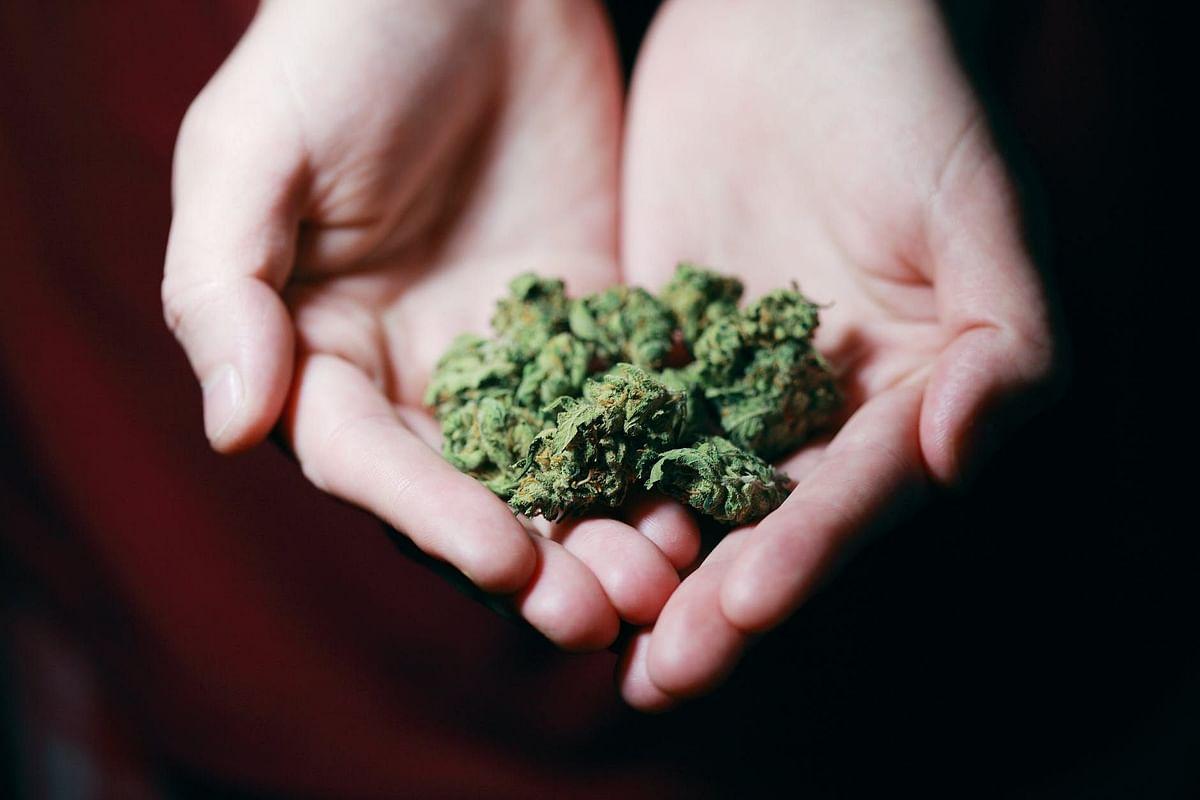Mumbai: ANC nabs man, 104 kg weed recovered