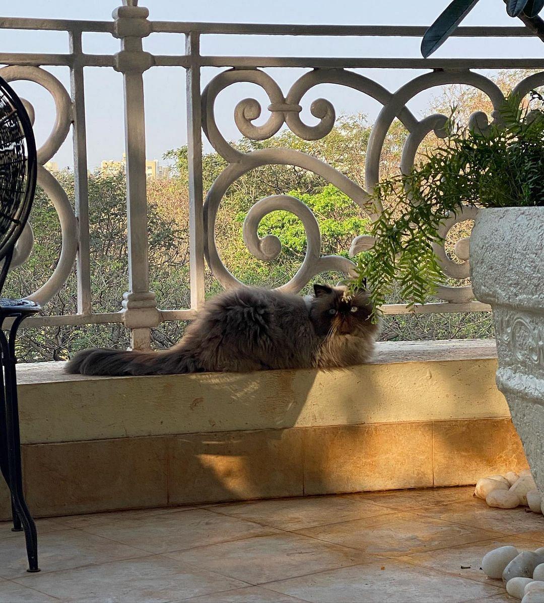Jacqueline's cat