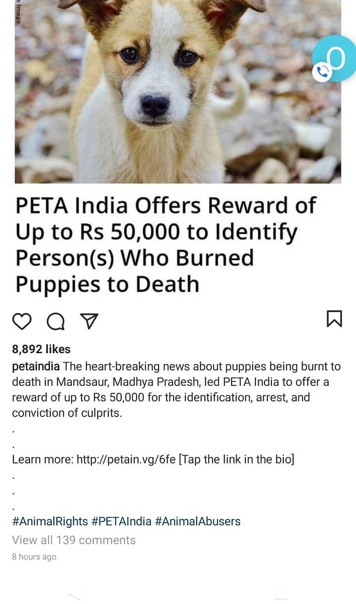 Madhya Pradesh: PETA announces Rs 50,000 reward to identify accused who 'burnt' nine puppies
