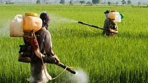 BHOPAL: Excessive use of pesticides behind rise in corona cases, says agriculture scientist from Gwalior university