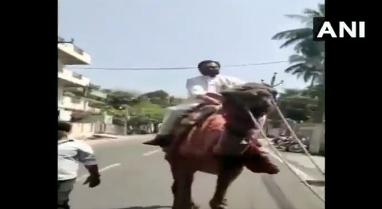 Andhra Pradesh: Congress leader and former MP, GV Harsha Kumar rides a camel in protest against rising fuel prices