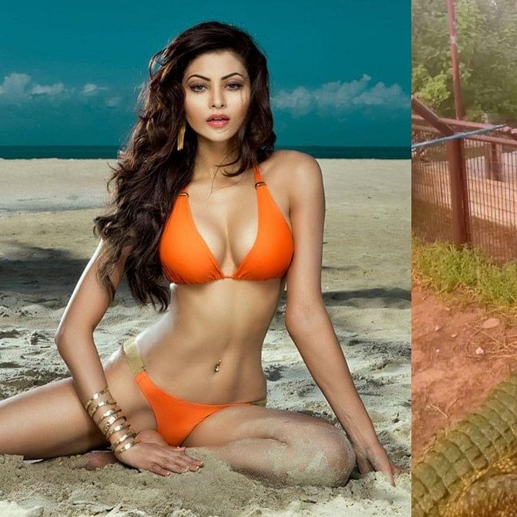 Watch: Urvashi Rautela celebrates 34M followers on Instagram by feeding a crocodile!