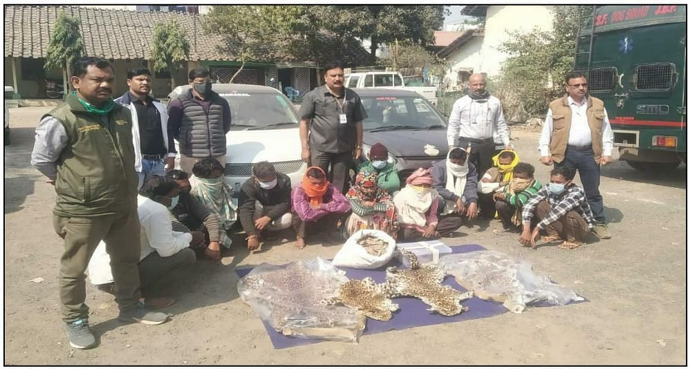 Indore: Forest dept teams take 16 into custody for possessing skin of protected wild animals