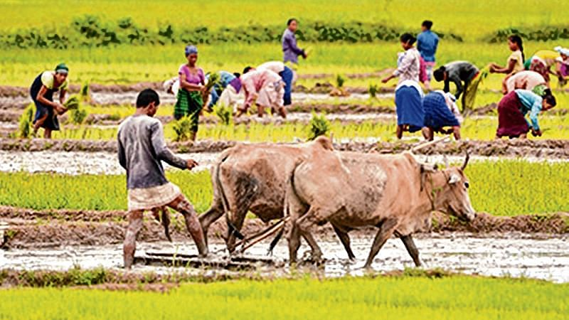 Economic Offences Wing chargesheet in Madhya Pradesh cooperative bank scam case: Rs 78 crore siphoned off while waiving farmers' loans by 18 cooperative societies