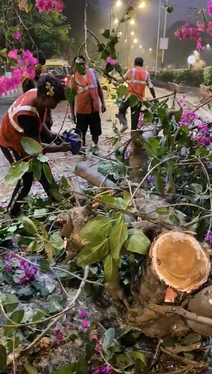 Mumbai: Four held for hacking banyan tree at Girgaum Chowpatty to clear view for hoardings