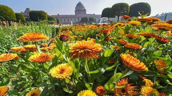 Delhi: Mughal Gardens at Rashtrapati Bhavan opens for public from today