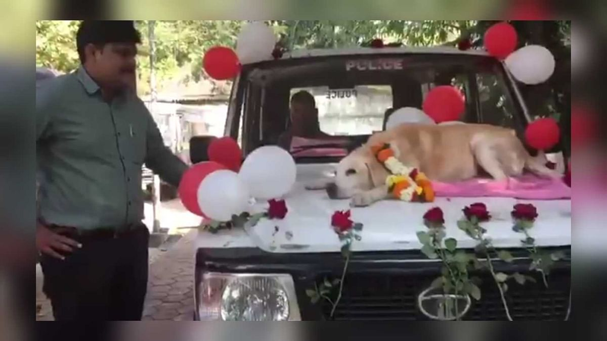 Watch: Nashik Police's grand farewell to sniffer dog after 11 years of service