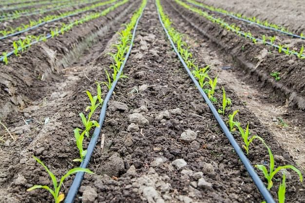 Budget 2021: Focussed implementation key to maximise impact of agriculture allocation