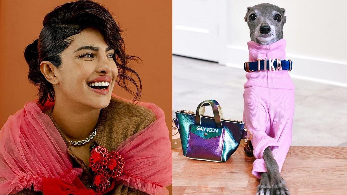 Watch: Priyanka Chopra takes fashion advice from Instagram's popular dog Tika the Iggy