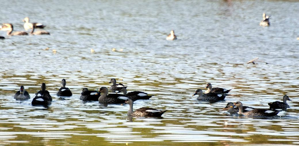 Birds at Upper Lake Bhopal