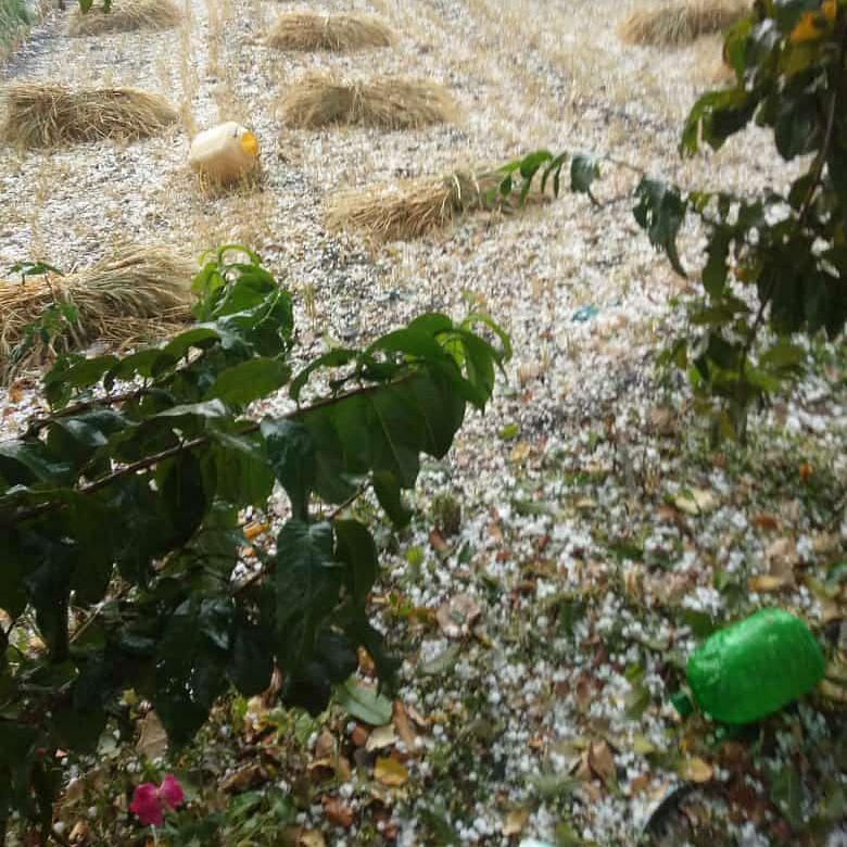 Madhya Pradesh: Unseasonal rain damages crops lying in fields, market yards in Dhar