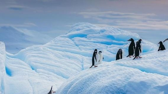Antarctic temperature to rise by 2044: Study