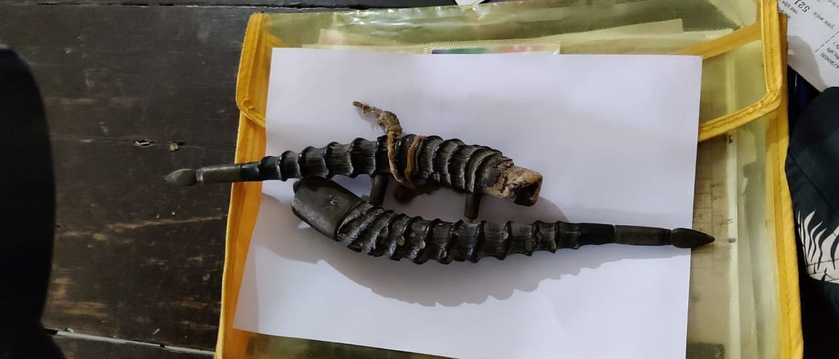 Horns of chinkara confiscated from a passenger at Devi Ahilya Bai Holkar Airport