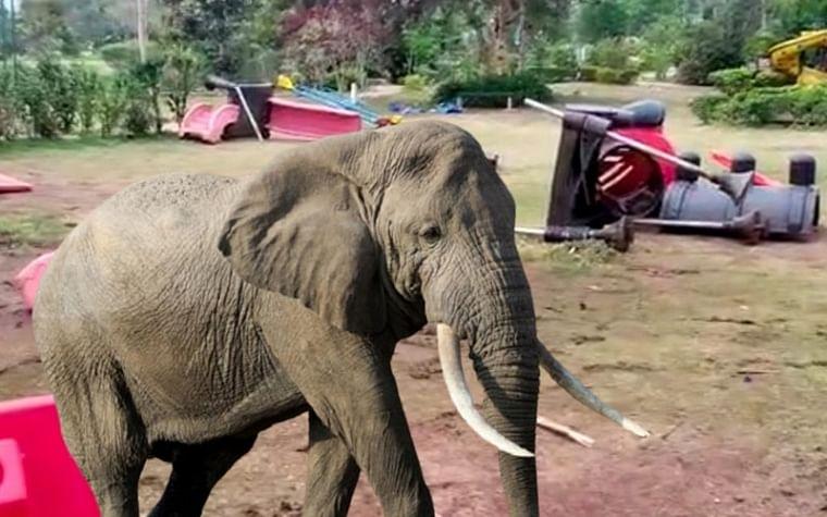 Chhattisgarh: Despite warning, duo ventures in forested area, wild elephant kills one