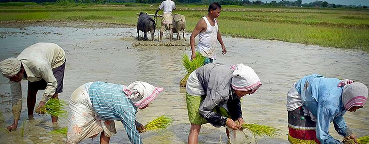Madhya Pradesh: Farmers irked as MSP purchase date of wheat postponed twice
