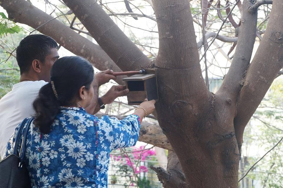 Fixing nest box on tree