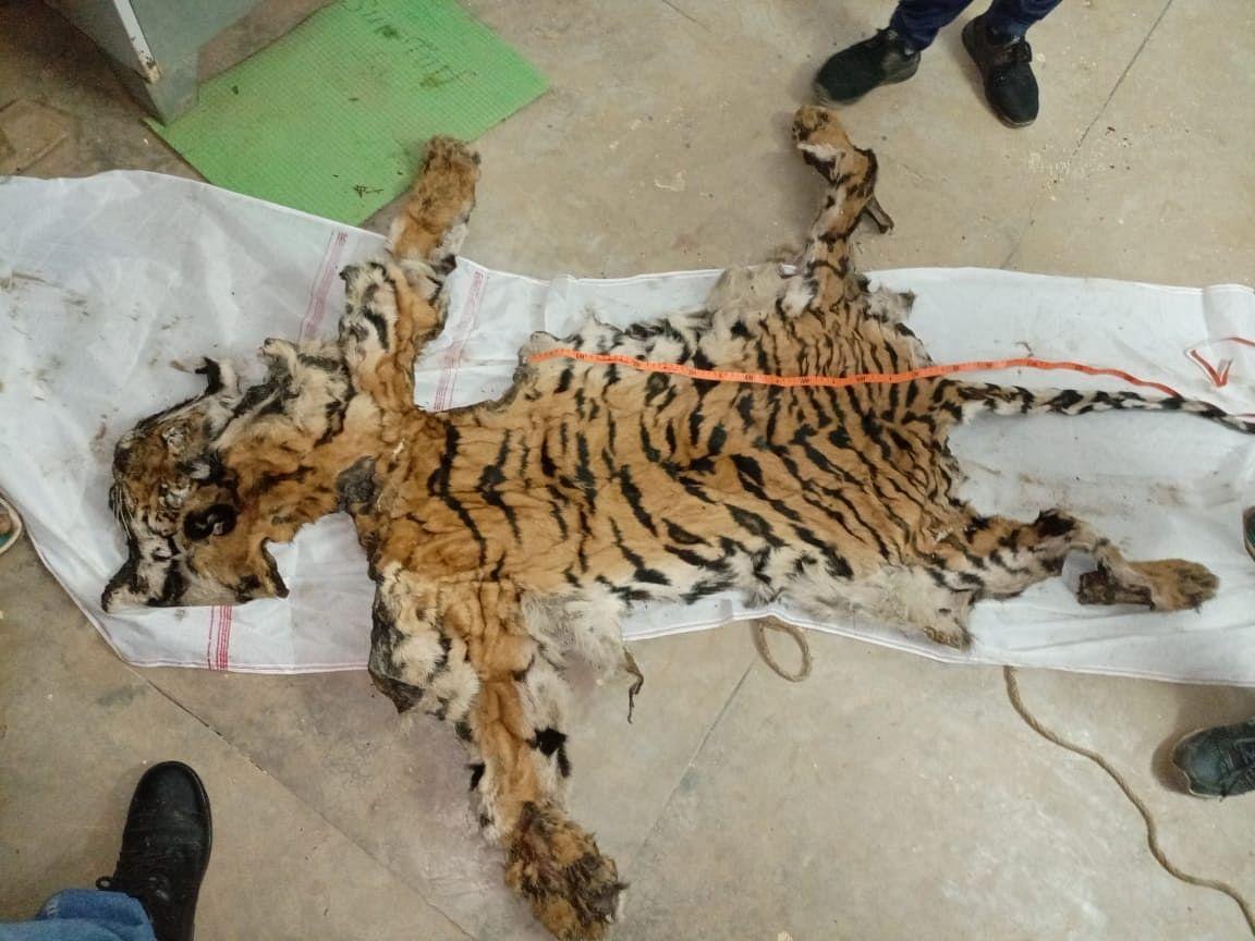 Chhattisgarh: 8 people including 5 policemen held with tiger skin in Dantewada