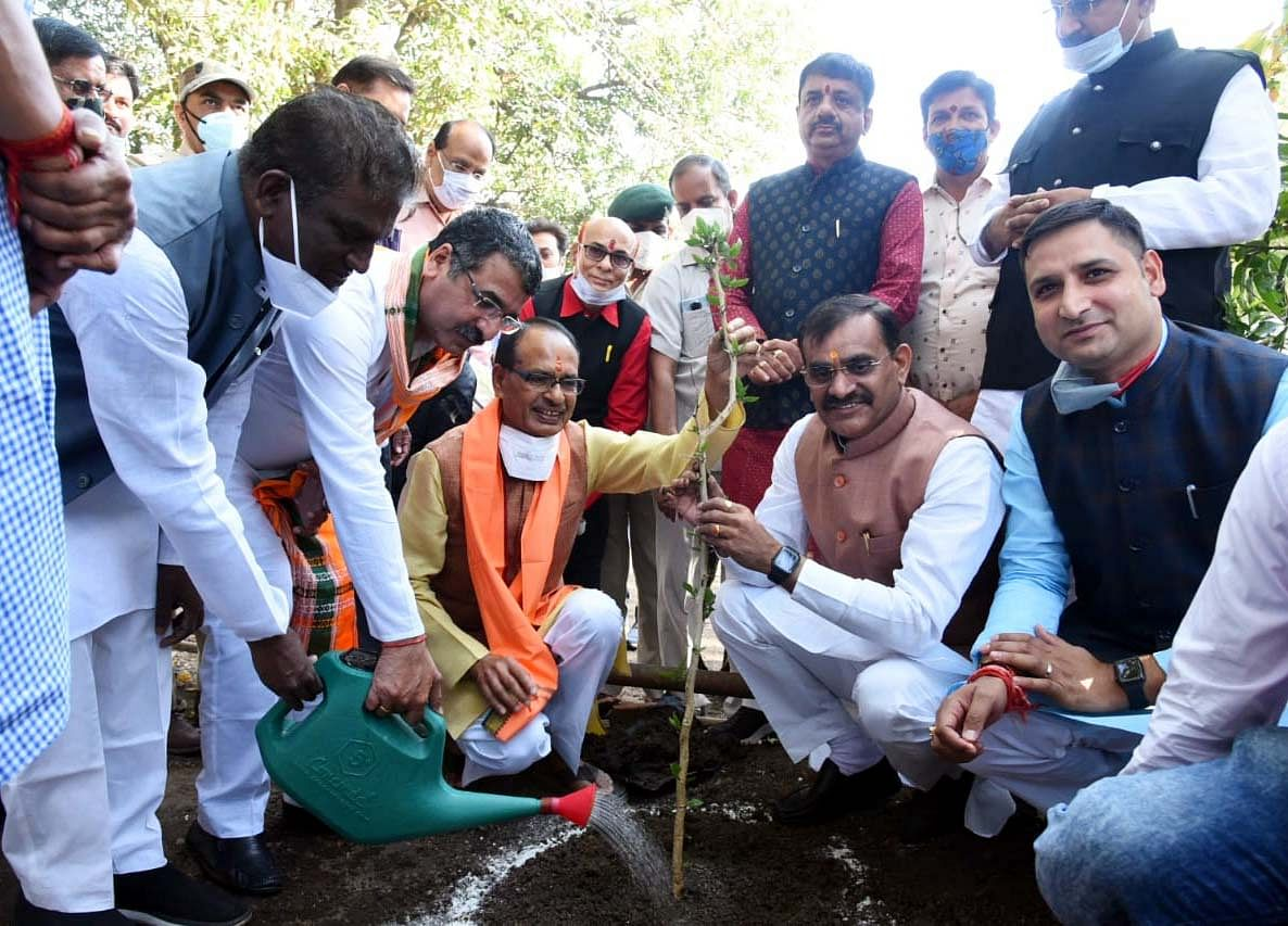Chief Minister Shivraj Singh Chouhan plants sapling of wood apple at CM House  on Friday. State BJP president VD Sharma was also present on the occasion