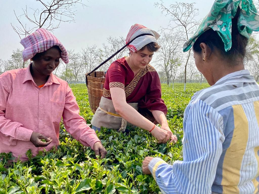 Priyanka Gandhi Vadra plucking tea leaves at tea garden in Sadharu Estate, Biswanath, Assam.