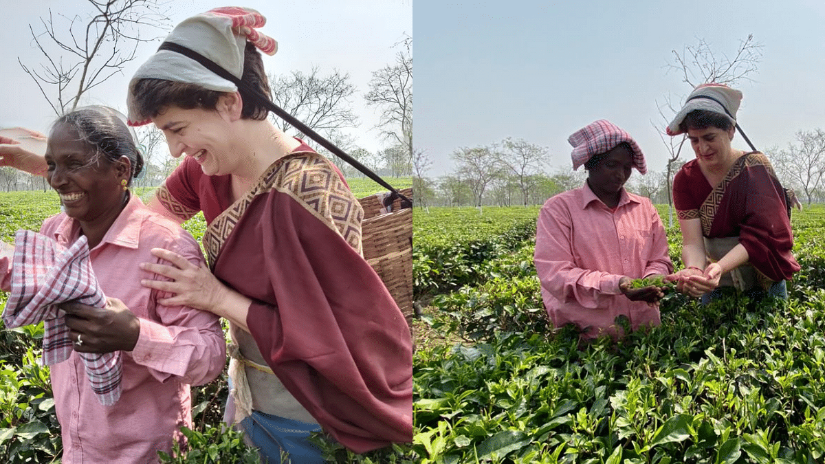 In Pics: Priyanka Gandhi Vadra seen plucking tea leaves with workers in Assam