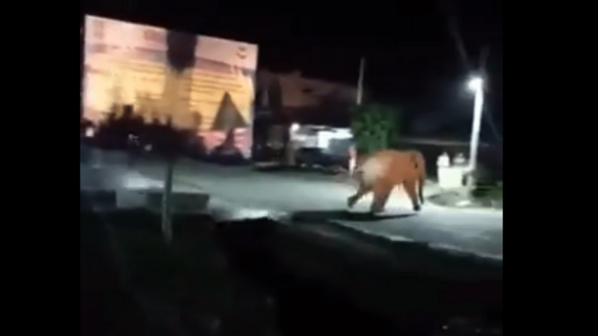 'Who is the animal here': Twitter asks after video of people chasing an elephant goes viral
