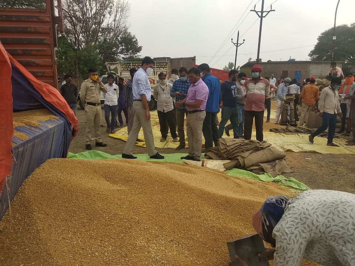 Indore: Wheat prices fall on low bulk buys, arrivals pegged higher