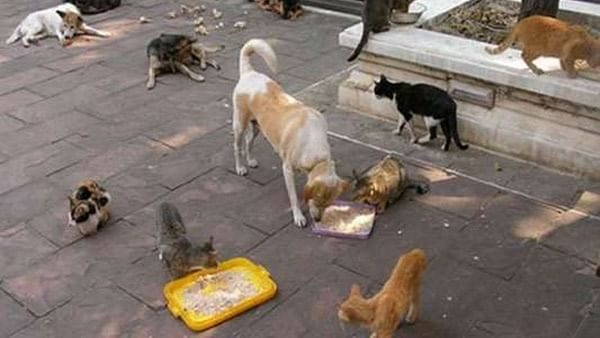 Feeding stray pup: Retired BMC officer booked for threatening, assaulting 27-year-old woman in Mumbai