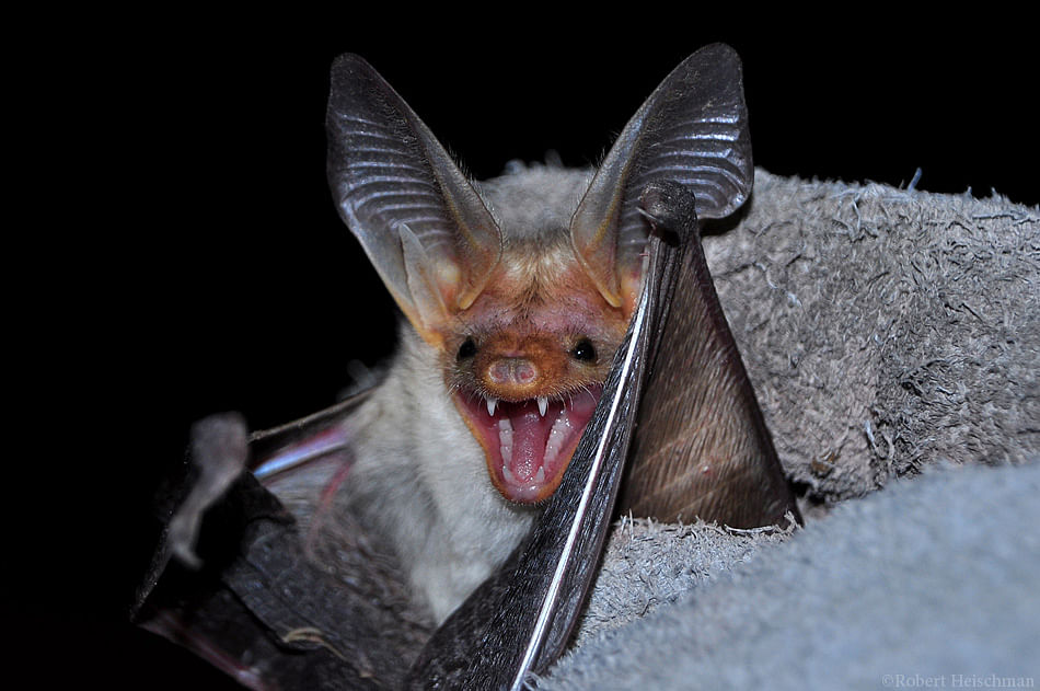 Wild bat inside Air India plane forces flight to return back to Delhi airport