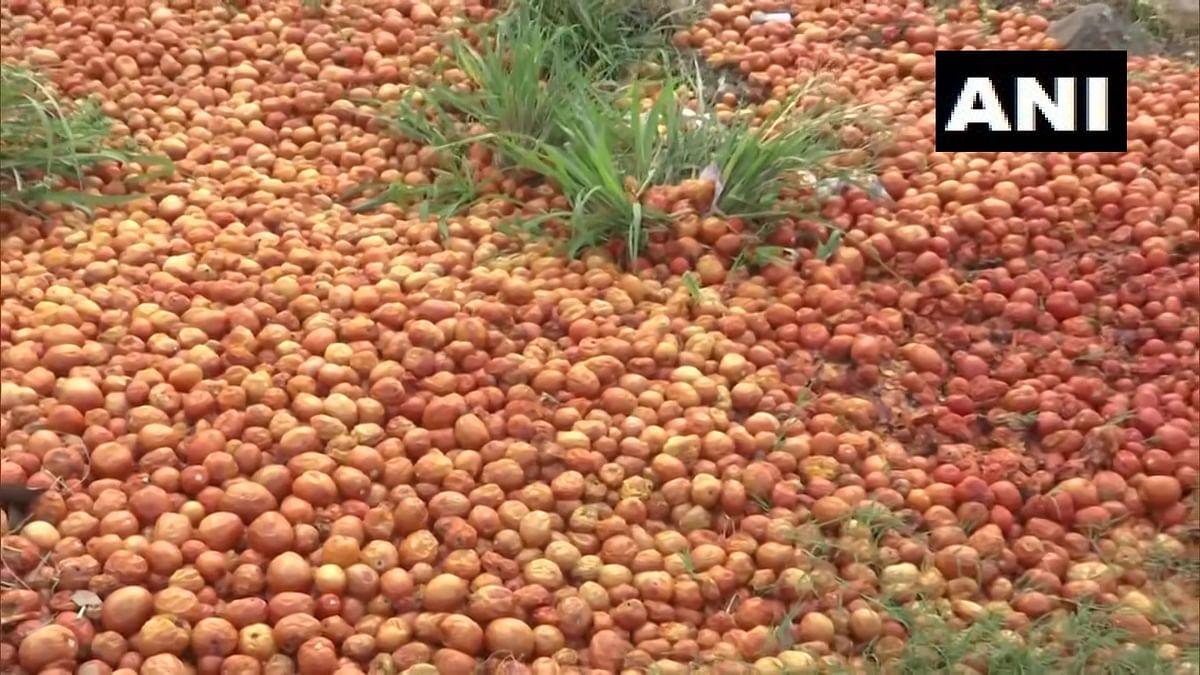 Bhopal: Farmers in Bhopal dump tomatoes, say no sales