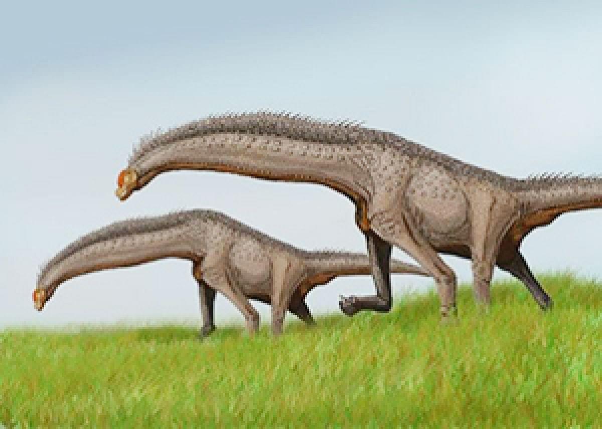 After Madhya Pradesh,100 million years old bones of sauropod dinosaurs discovered in Meghalaya