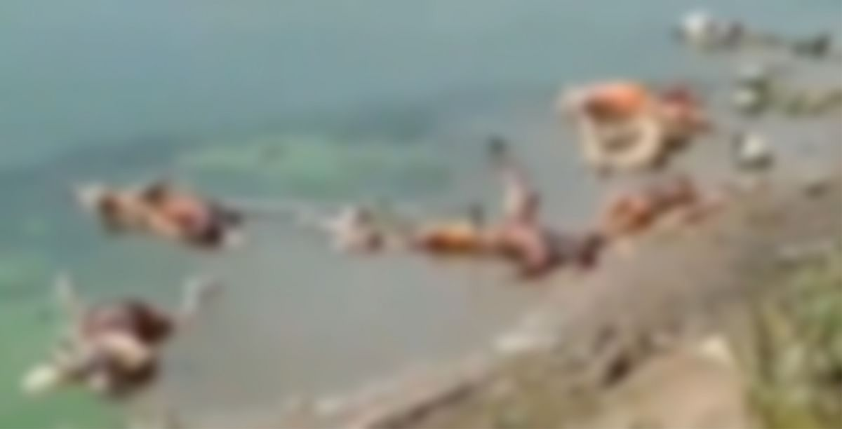 'Apocalyptic scenes': Twitter slam UP, Bihar govt as 45 decomposed bodies found in Ganga in Buxar
