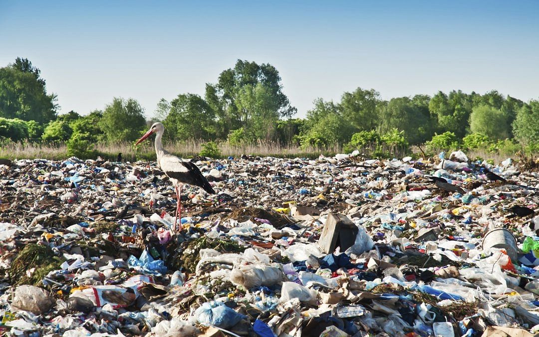 Mumbai: Now, trash booms to help curb garbage from entering the sea