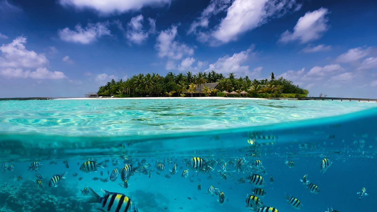 World Ocean Day 2021: Amazing facts about mighty water bodies you should know
