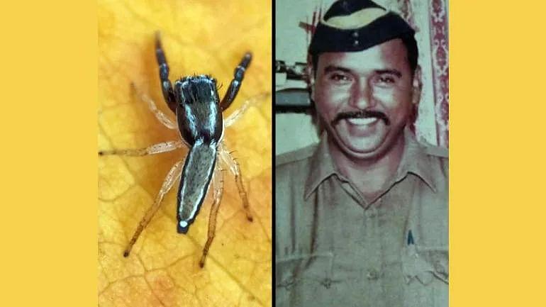 "New spider species named ""Icius Tukarami"" in memory of the 26/11 Martyr, Tukaram Omble."