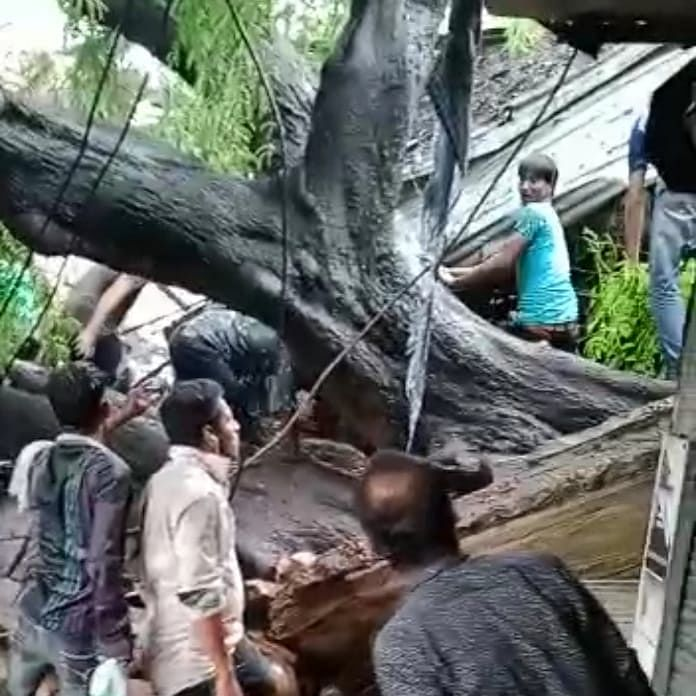 Bhopal: Heavy rain lashes city, four persons trapped after tree falls on eatery